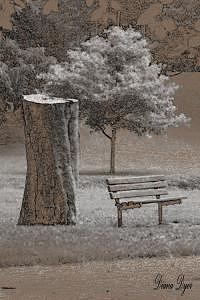 Bench Photograph - Quiet Time by Diana Dyer