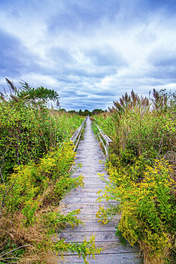 Quogue Goldenrod Walkway by Robert Seifert