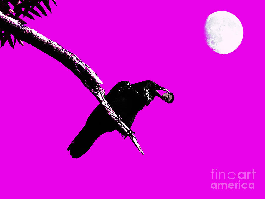 Goth Photograph - Quoth The Raven Nevermore . Magenta by Wingsdomain Art and Photography