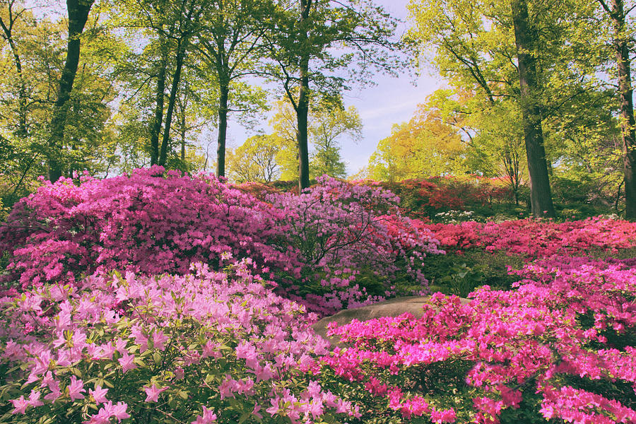 Azalea Photograph - The Colors Of May by Jessica Jenney