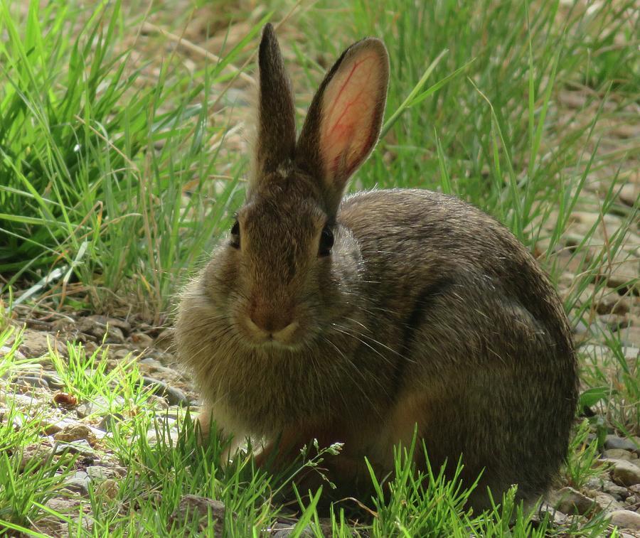 Rabbit in Sunlight by Judith Lauter