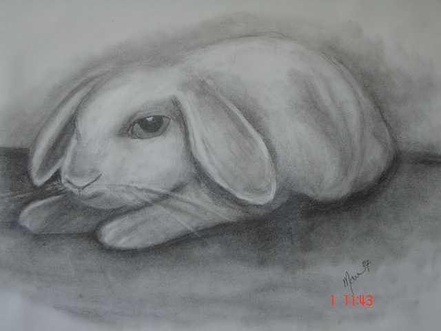 Animal Drawing - Rabbit by Maureen Blakeley
