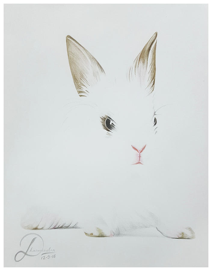 Rabbit Realistic Color Pencil Sketch Drawing by Sketches In