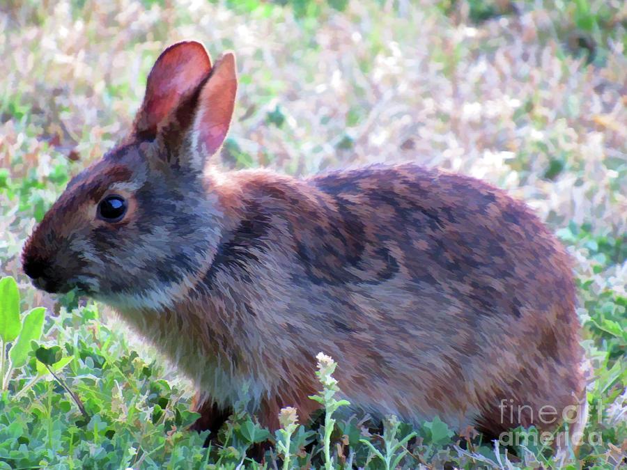 Rabbit by Roberta Byram