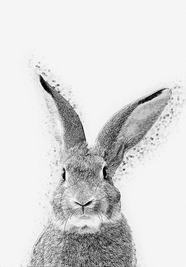 Rabbit Digital Art