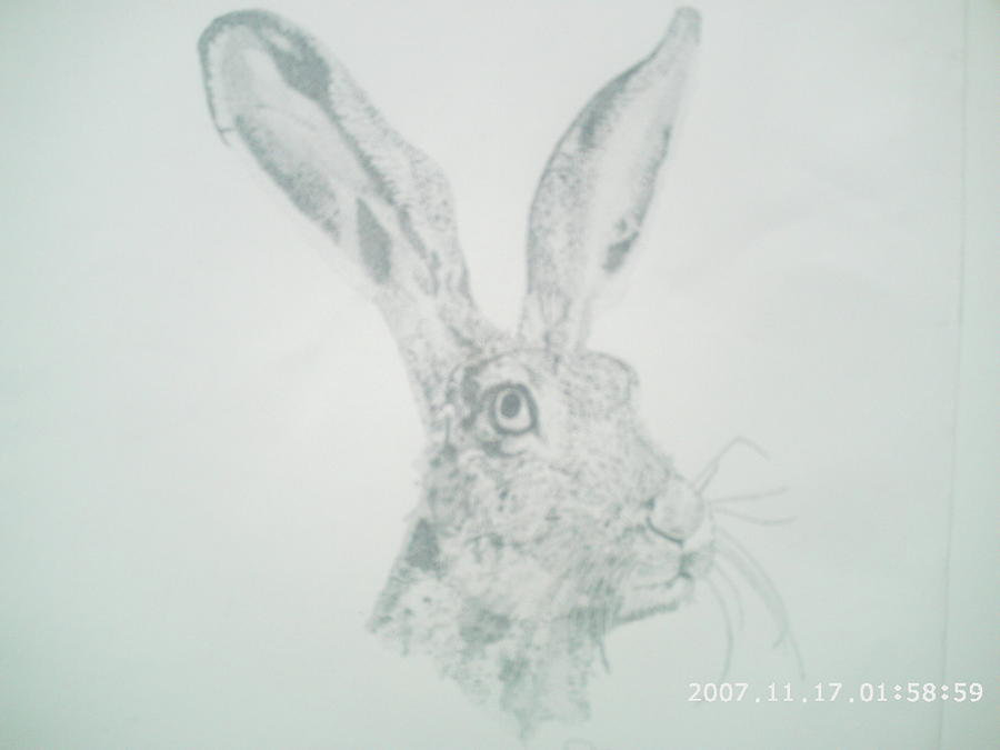 Wildlife Drawing - Rabbit Without Expression by Peter Fredericks