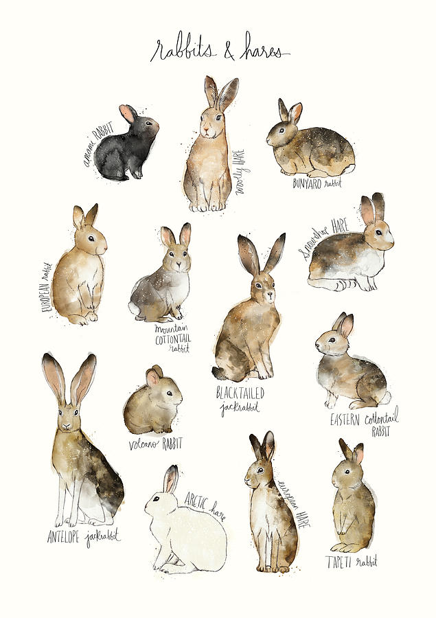 Rabbits Painting - Rabbits And Hares by Amy Hamilton