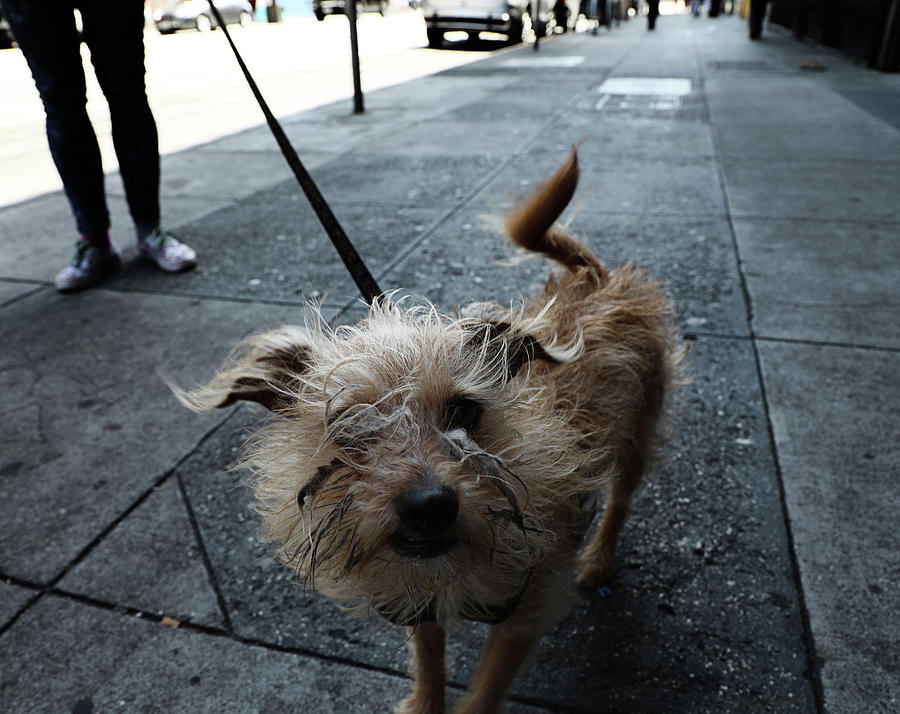 Dog Photograph - Rabid Dog by The Artist Project