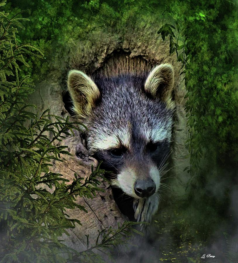 Raccoon Photograph - Raccoon In A Log by G Berry