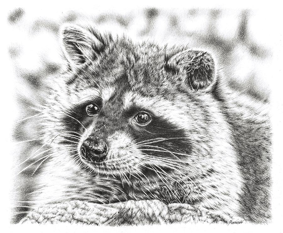 Raccoon by Remrov