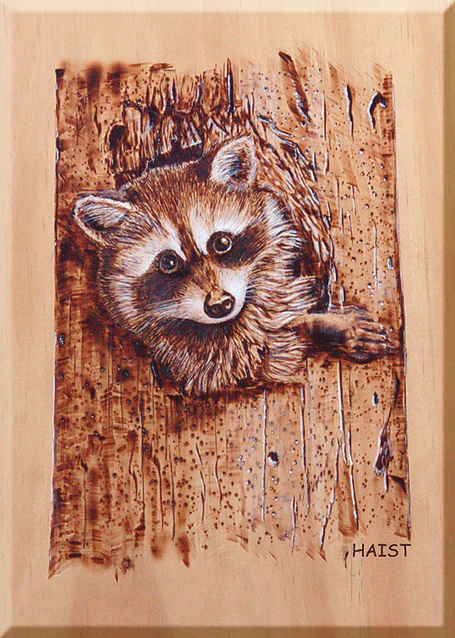 Raccoon Pyrography By Ron Haist