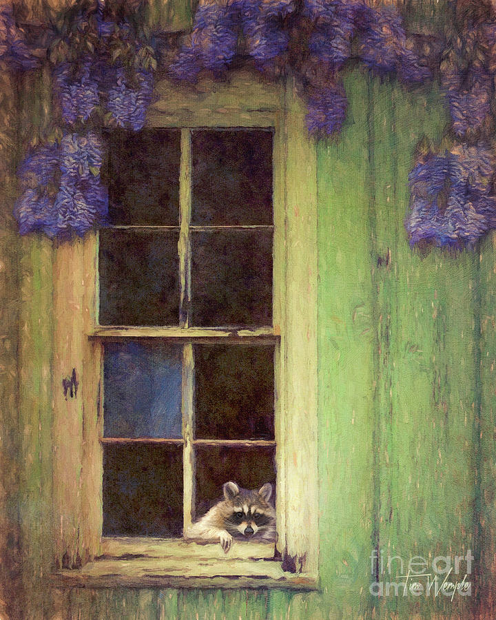 Raccoon Window by Tim Wemple