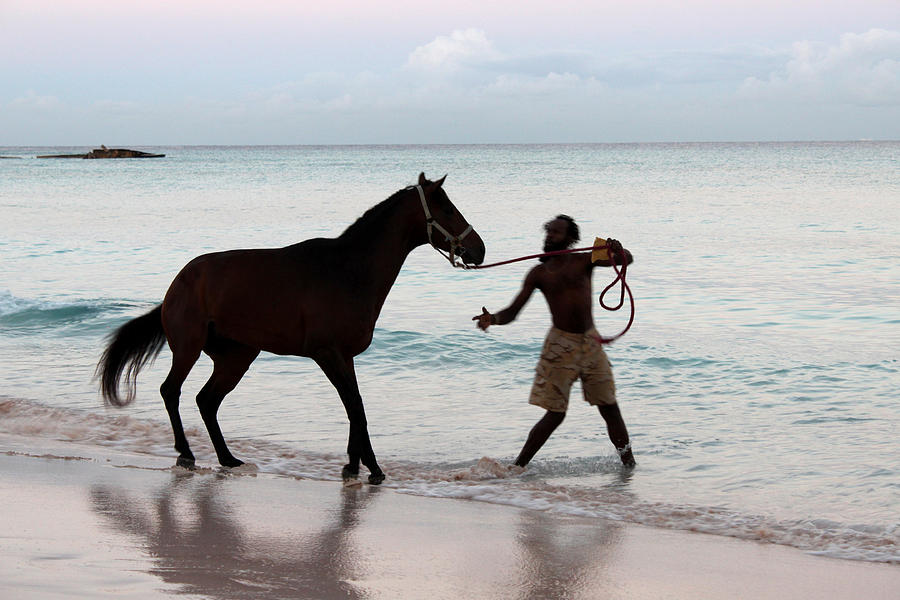 Barbados Photograph - Race Horse And Groom 1 by Barbara Marcus