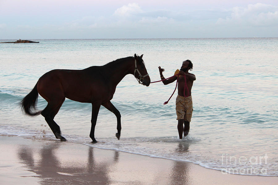 Barbados Photograph - Race Horse And Groom 2 by Barbara Marcus