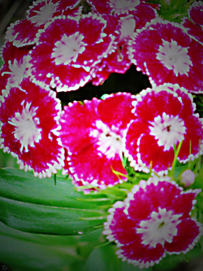 Flower Arrangement Photograph - Radiant Red  by Debra     Vatalaro