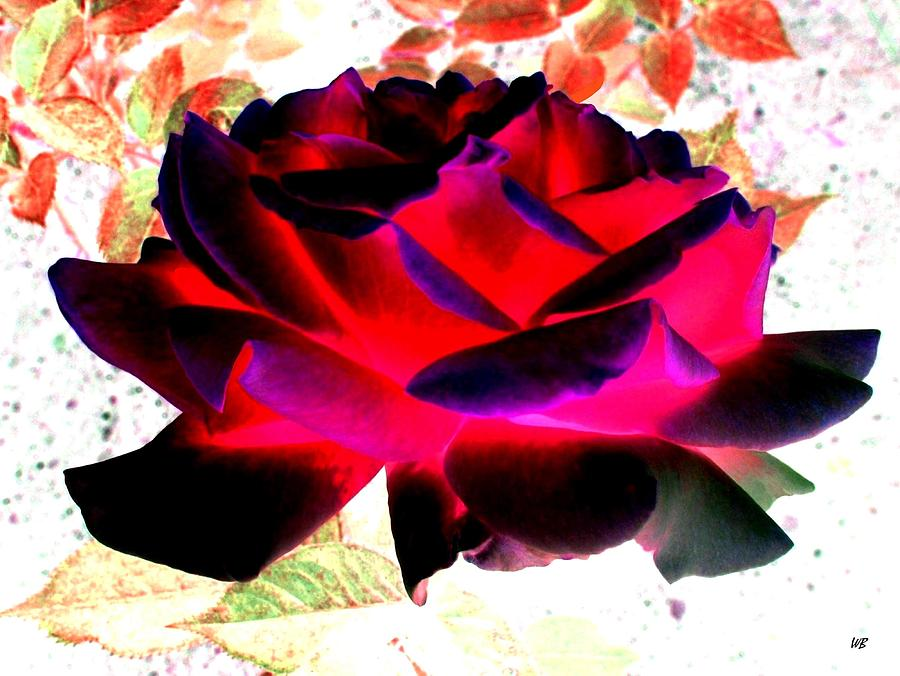 Rose Digital Art - Radiant Red Rose by Will Borden