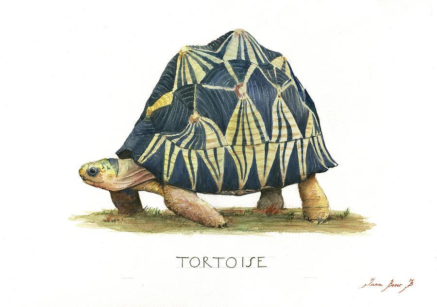 Radiated Tortoise Painting - Radiated Tortoise  by Juan Bosco