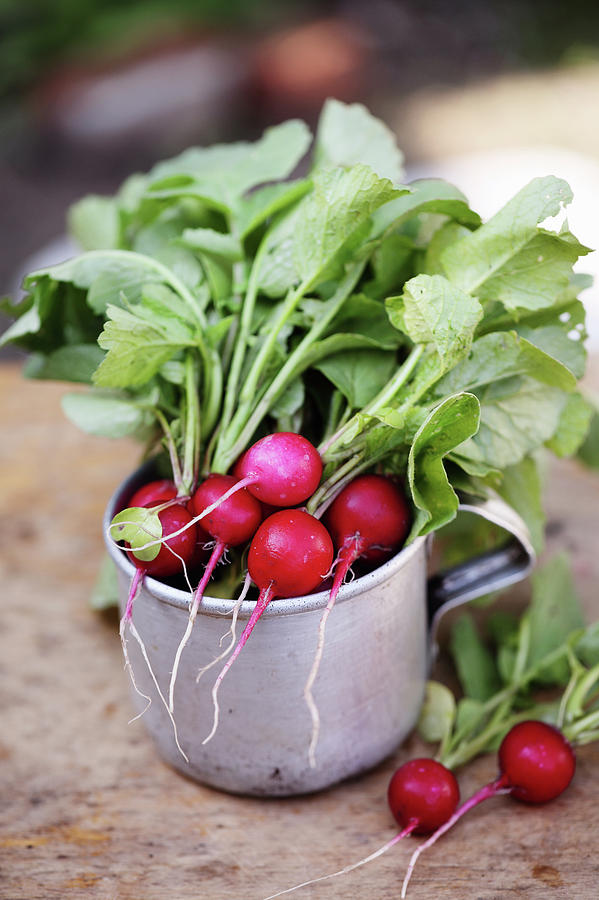 Radish In A Metal Cup Photograph