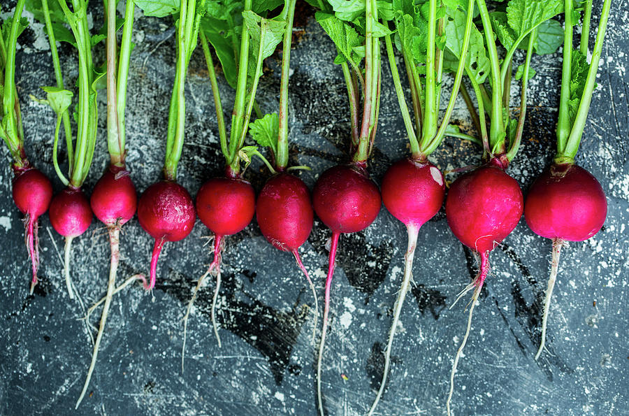 Radish In A Row Photograph