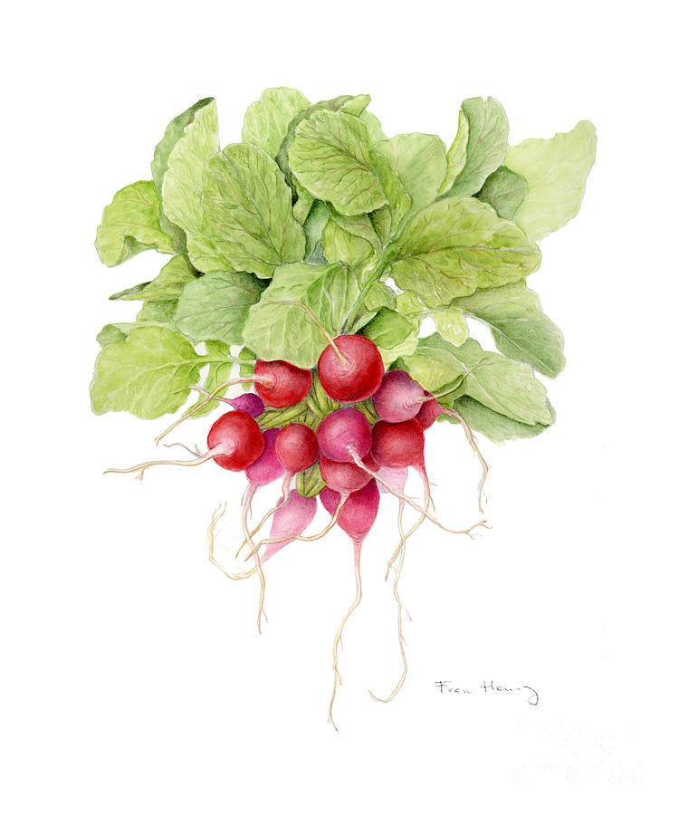 radishes by Fran Henig