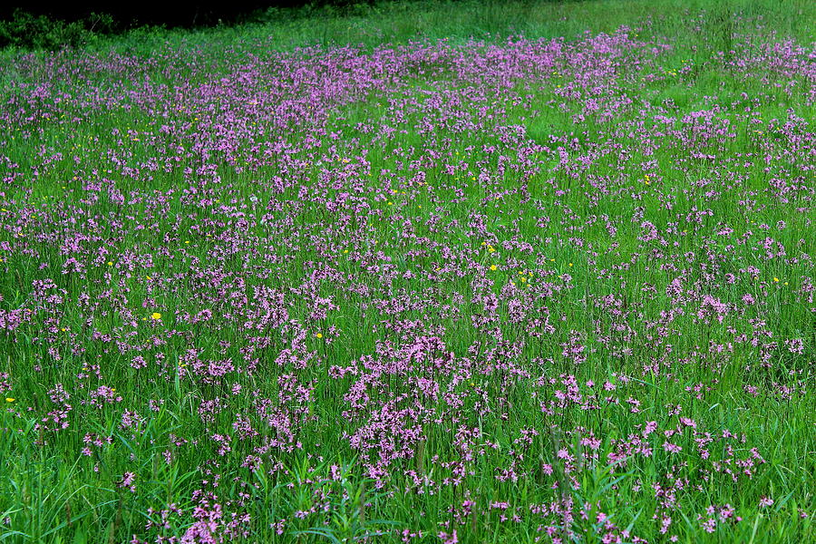 Hayfield Photograph - Ragged Robin IIi by Brian Lucia