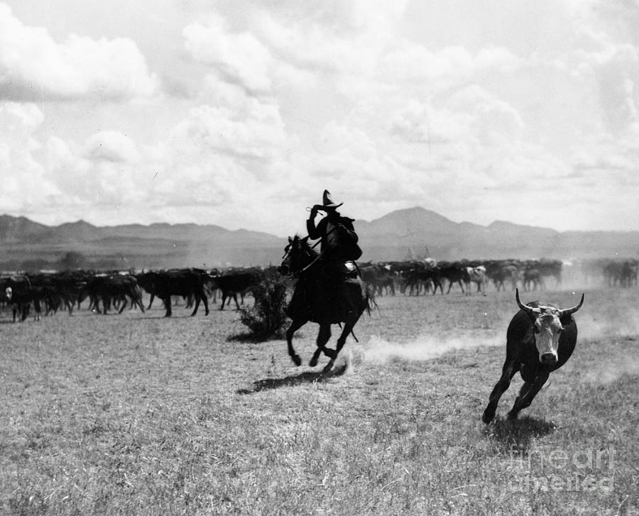 Wrangler Photograph - Raguero Cutting Out A Cow From The Herd by Raguero cutting out a cow from the herd