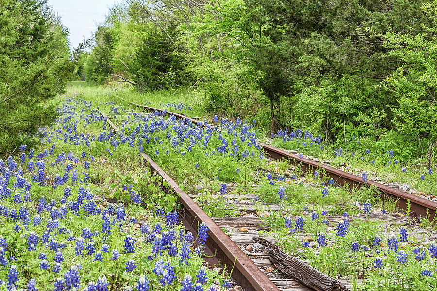 Rails and Bluebonnets 1 by Victor Culpepper