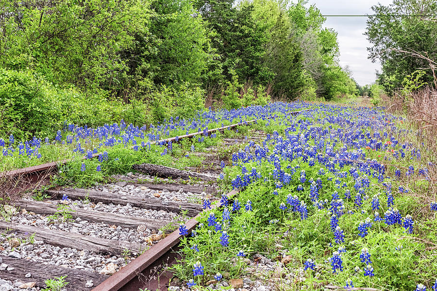 Rails and Bluebonnets 3 by Victor Culpepper