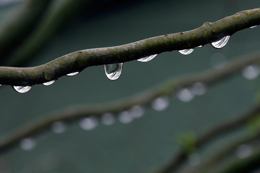 Horizontal Photograph - Rain Branch by Photography by Gordana Adamovic Mladenovic
