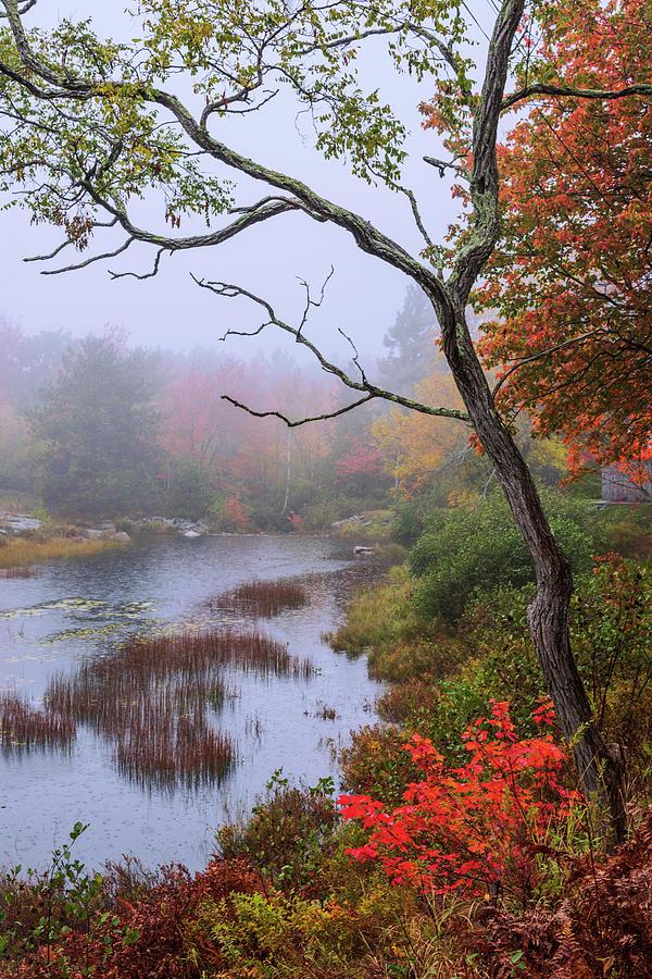Rain Photograph - Rain by Chad Dutson