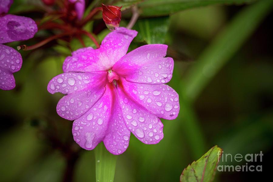 Rain Drops 4 by Daniel Knighton