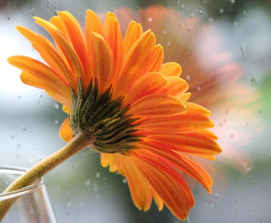 Floral Still Life Photograph - Rain Drops At My Window by Angela Davies
