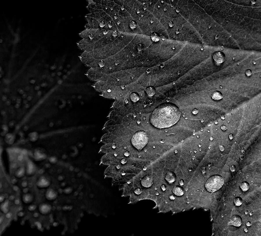 Rain Drops Photograph - Rain Drops On Leaf by Robert Ullmann