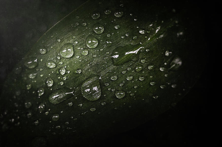 Rain Drops On Leaf Photograph