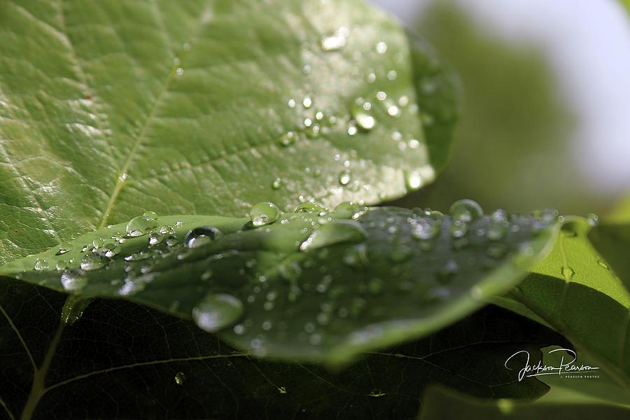 Rain by Jackson Pearson