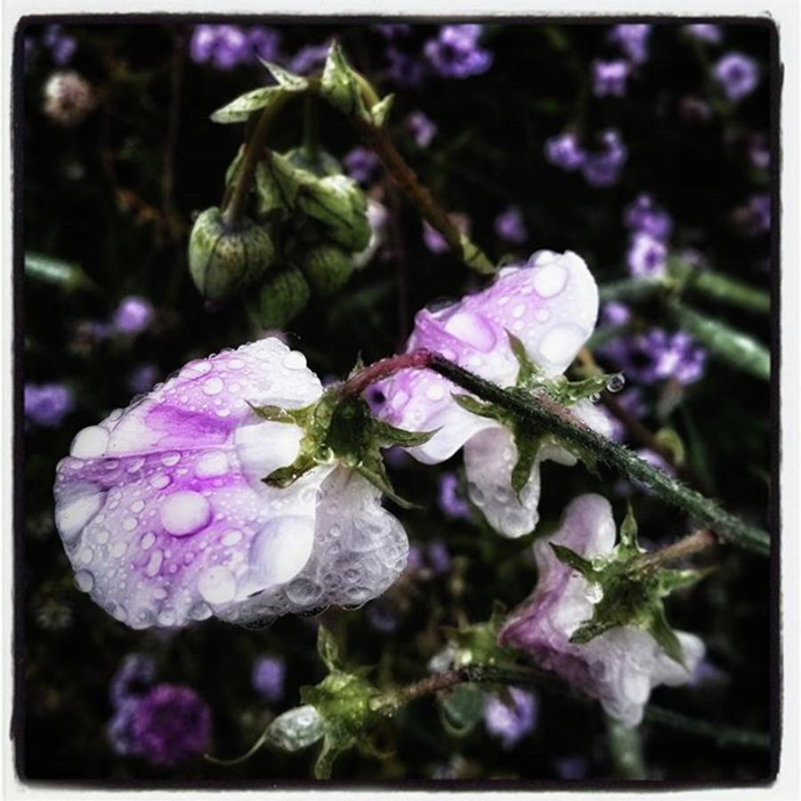 Flowers Photograph - Rain Kissed Petals. This Flower Art by Mr Photojimsf