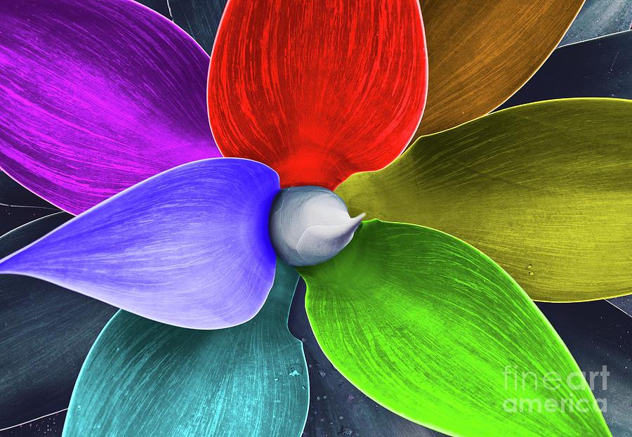 Rainbow Agave Photograph