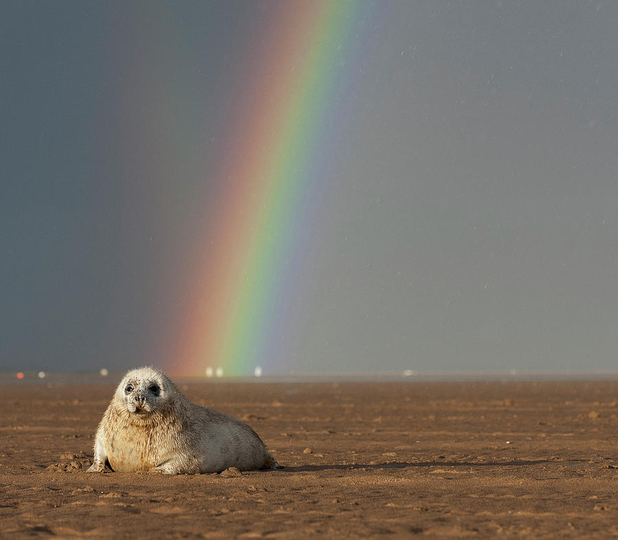 Rainbow Photograph - Rainbow and Seal by Phillips and Phillips