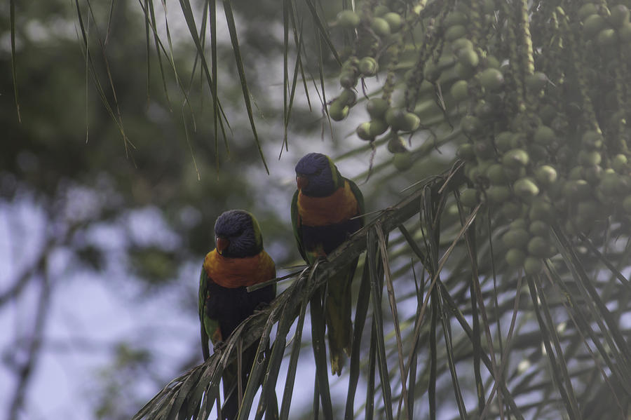 Rainbow Birds In Tree Photograph