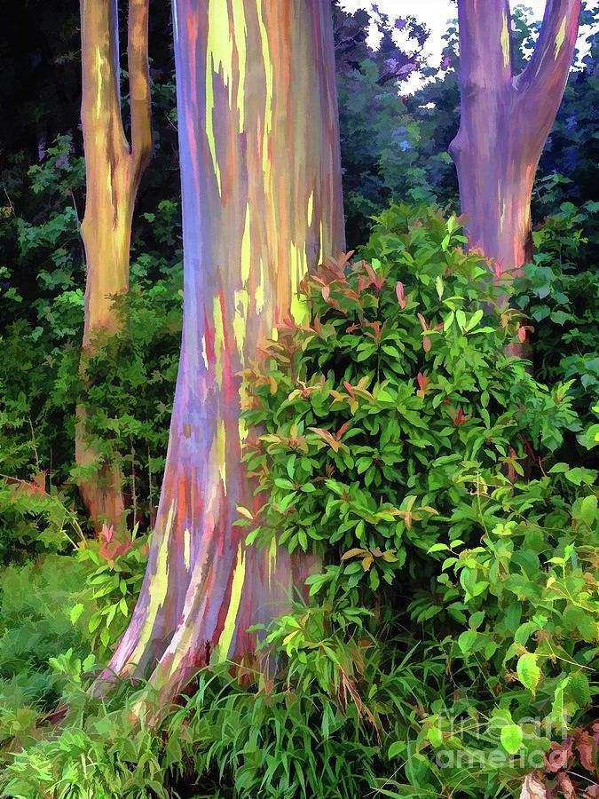 rainbow eucalyptus trees on maui photograph by bob lentz
