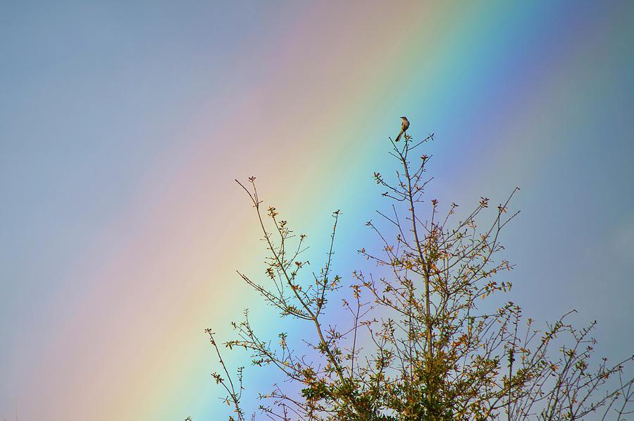 Rainbow Photograph - Rainbow by Laurie Hasan