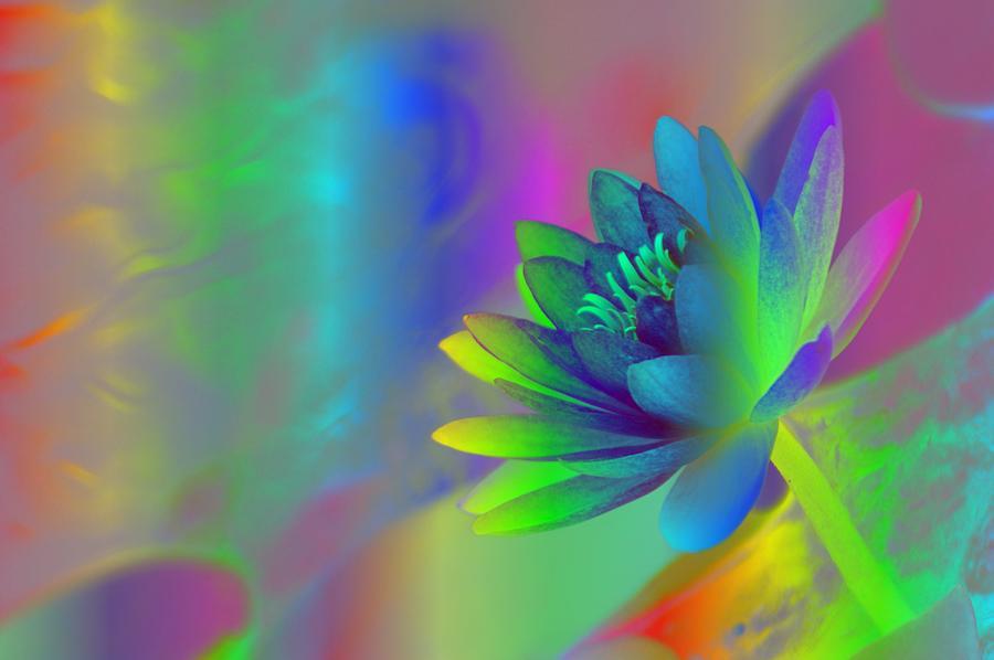 Rainbow Photograph - Rainbow Lily by Donna Bentley
