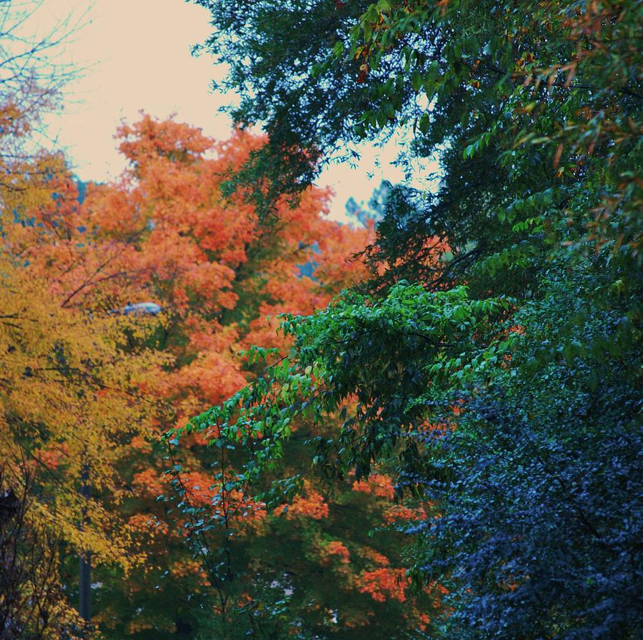 Trees Photograph - Rainbow Of Fall by Trudi Southerland