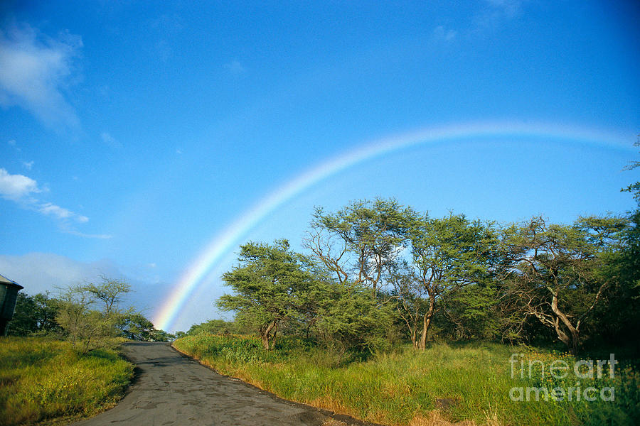 Arch Photograph - Rainbow Over Treetops by Peter French - Printscapes