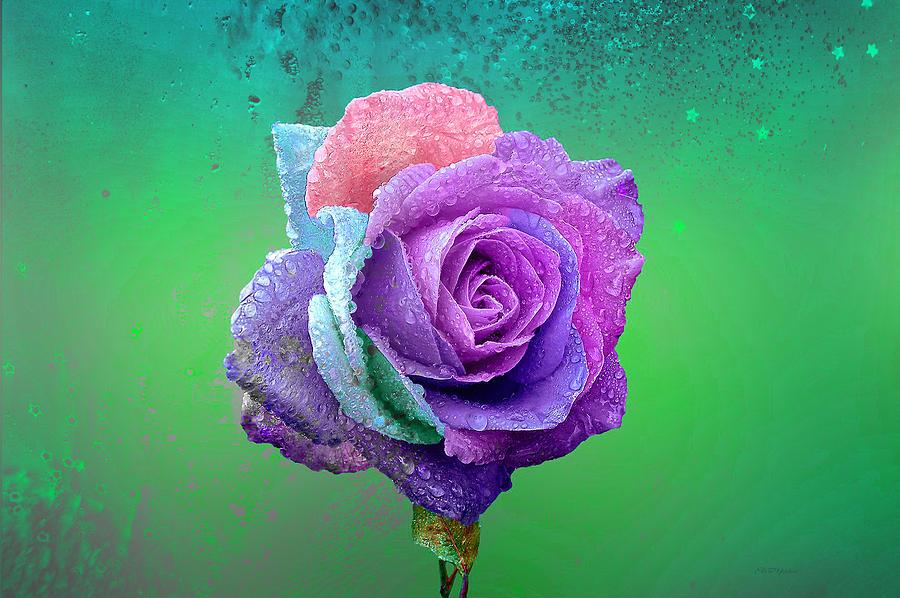 Photo Photograph - Rainbow Rose by Ericamaxine Price