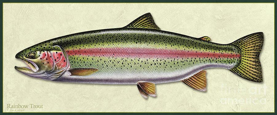 Rainbow trout ID by Jon Q Wright