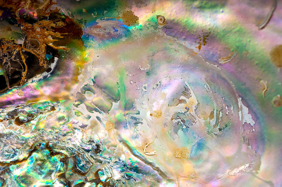 Abalone Photograph - Rainbows and Seaweed by Joy Gerow