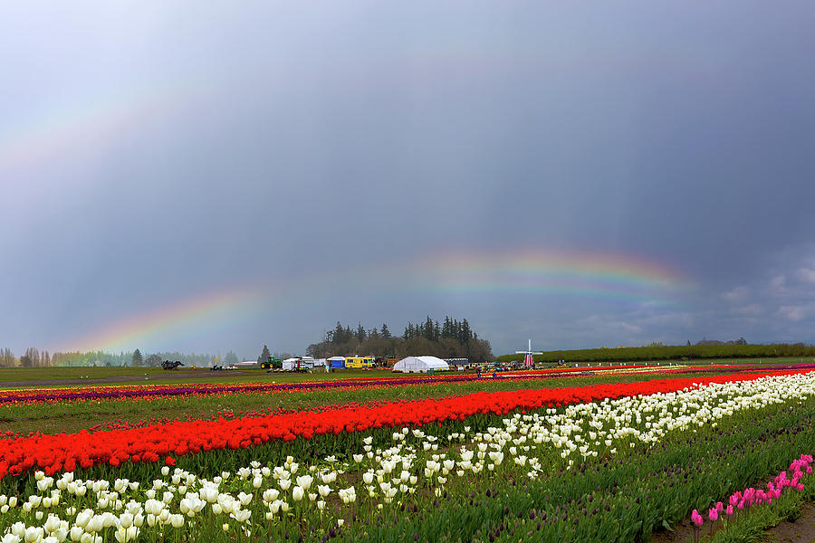 Tulips Photograph - Rainbows At Tulip Festival by David Gn