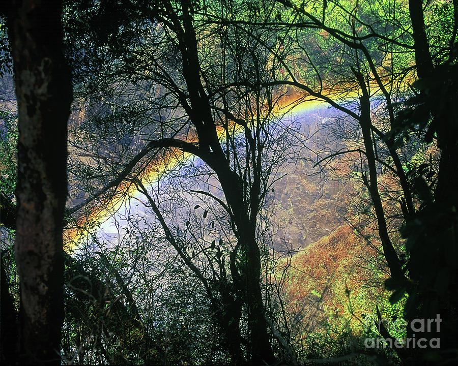 Rainbow Through The Trees Victoria Falls Zimbabwe Africa
