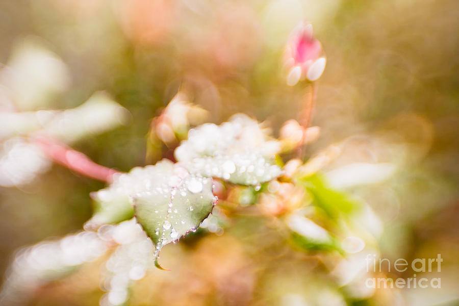 Abstract Photograph - Raindrops Glisten by Lisa McStamp
